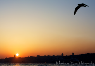 A seagull takes flight at sunset viewed from the Asian side.